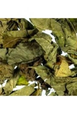 Holunderblätter ganz
