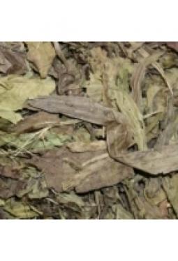 Spitzwegerich Blätter ganz