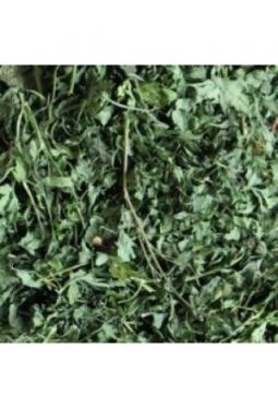 Petersilien Blätter mit Stiele