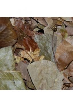 Birnenbaumblätter getrocknet