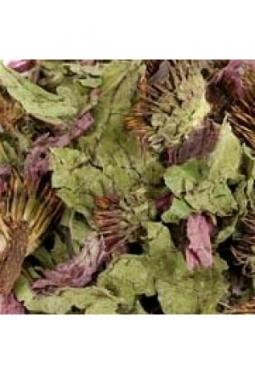 Echinaceablätter ganz